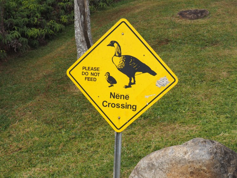 Nene Crossing sign in Kauai Hawaii